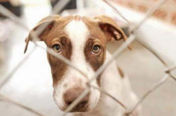Hayvan Hakları Yasası ve Cevapsız Sorular