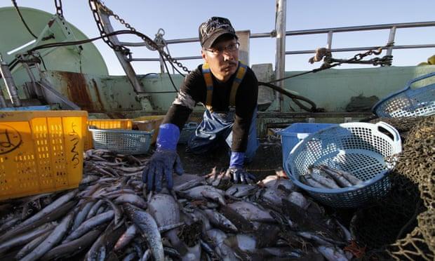 Fukuşimada balıkçılık