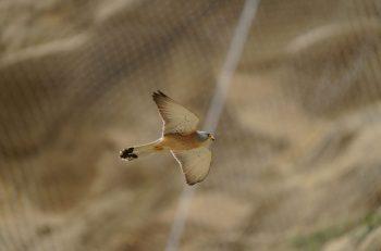 Göçmen Kuşlar İçin Yaşam Mücadelesi Devam Ediyor