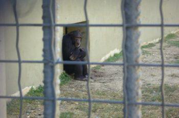 Hayvanat Bahçeleri Bizi Ekofobiden Kurtarır mı?