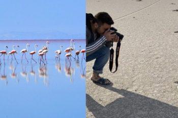 'Flamingo Ölümlerinin Sorumlusu Yanlış Tarım Politikaları!'
