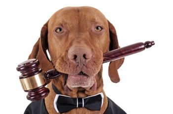 '5199 Sayılı Hayvanları Koruma Kanunu'na Yaz Makyajı Yapıldı'